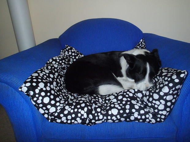 Giant Comfy Pillow Pet Bed  DIYIdeaCentercom