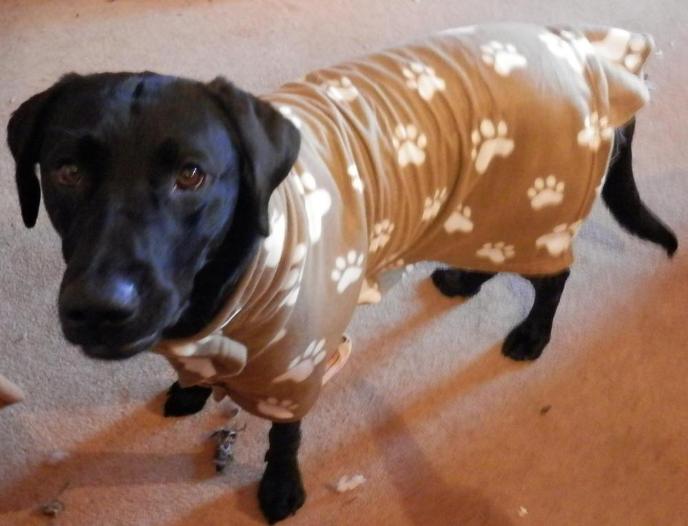 Winter Dog Coat  AllFreeSewingcom