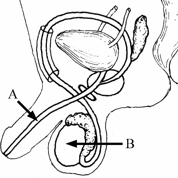 male edison wiring wiring diagram schematic