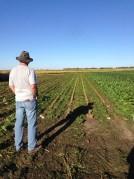 Sugar Beet Harvest September Topping Dale