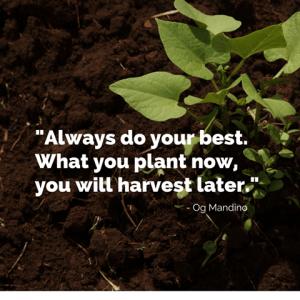 Syngenta - Always do your best