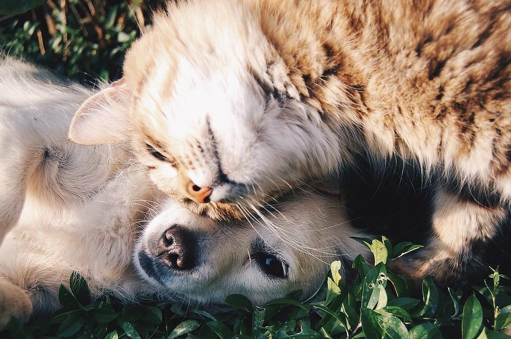 Hund und Katze kuscheln und lieben sich