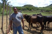 Juan Francisco Gonell is the President of the Association of Ganaderos from El Cayal in Guayubín, one of the thirteen dairy associations that participated in the index insurance test run in northwestern Dominican Republic. Photo: Radost Stanimirova/IRI