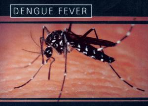 Death of a 9 y-o girl from dengue fever sparks concerns