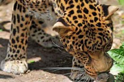 Small Group Safari South Africa One Way 17 Days