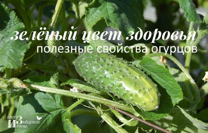 Почему огурцы мягкие при засолке: кислый огурец