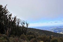 Lake Waikaremoana (101)_1_1