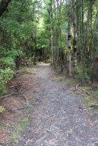 Lake Waikaremoana (273)_1