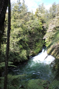 Rotorua (618)