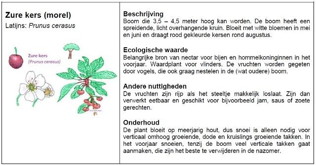 Fragment van handleiding: beschrijving van gebruikte plant.
