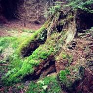 Baumstamm Moos Wald