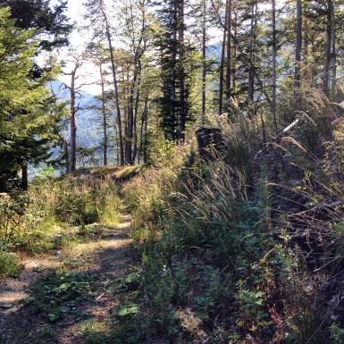 Waldweg Semmering