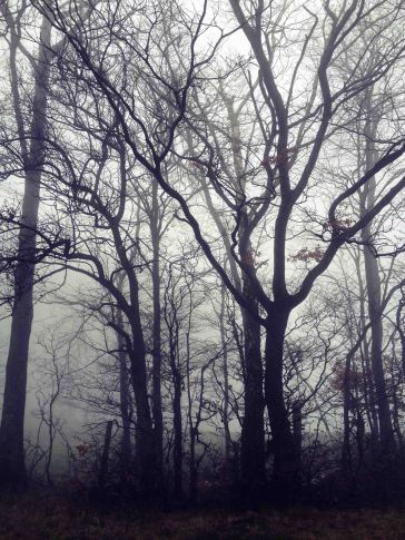 schwarze Bäume im Nebel