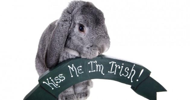 80 Irish slang words.