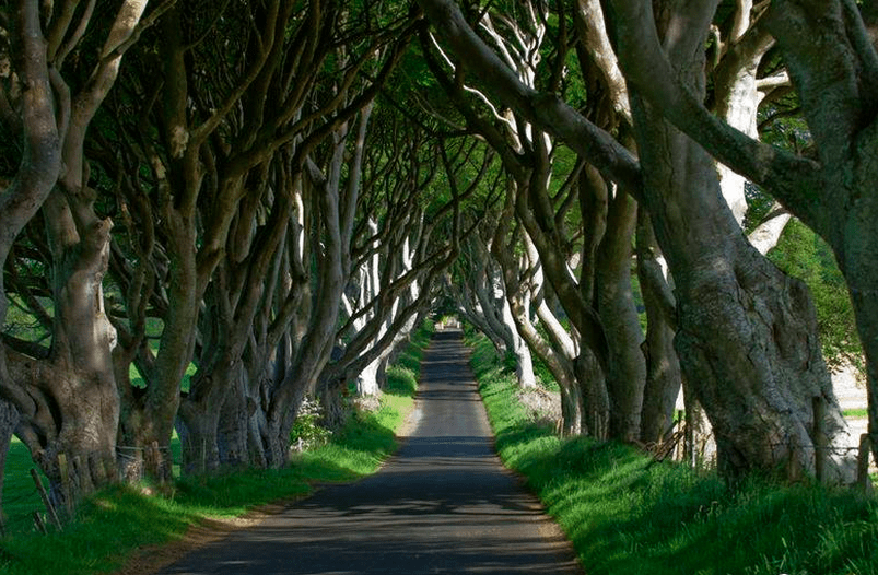 hedges in Ballymoney - Visit Ireland
