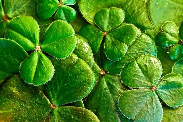 most popular irish around the world