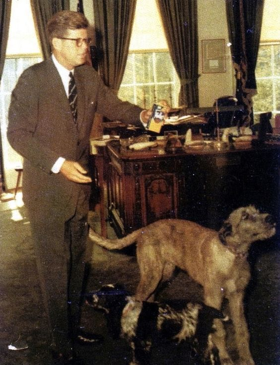 John F. Kennedy and Wolfie (Mixed Breed) and Shannon (Irish Cocker Spaniel)