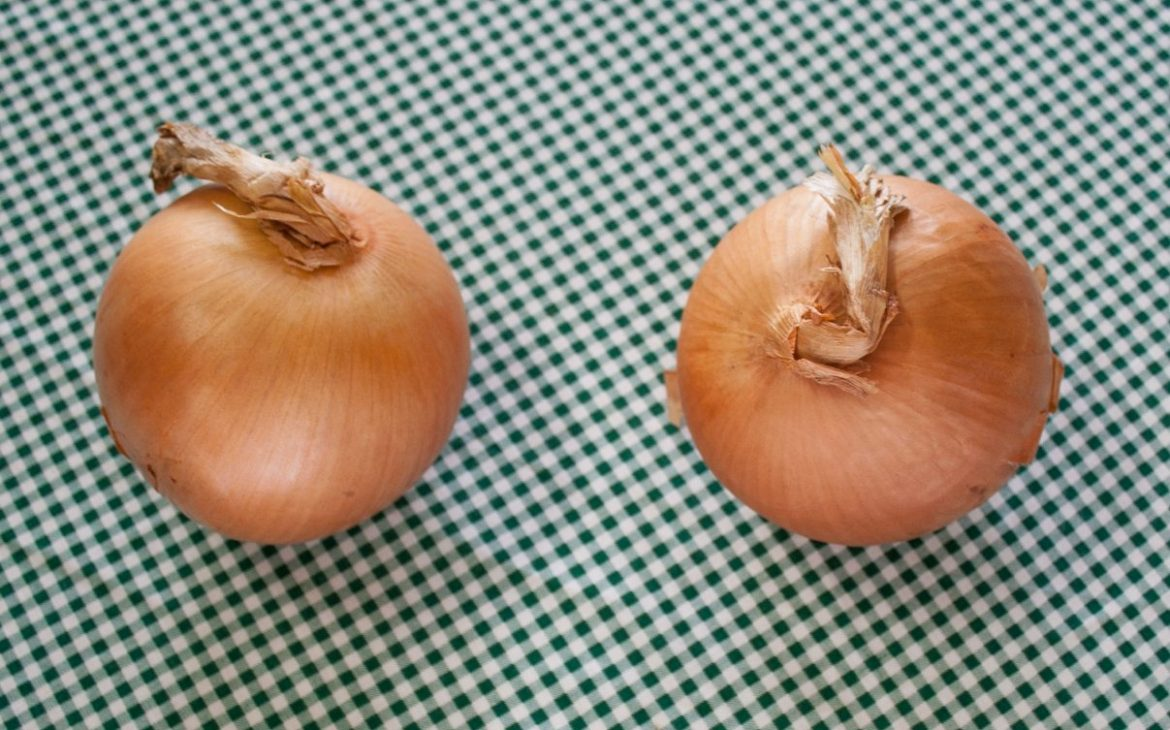 Two unpeeled yellow onions