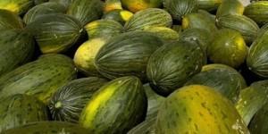 melonvert