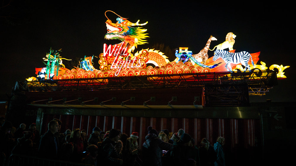 Dublin+Zoo+wild+lights+image_01