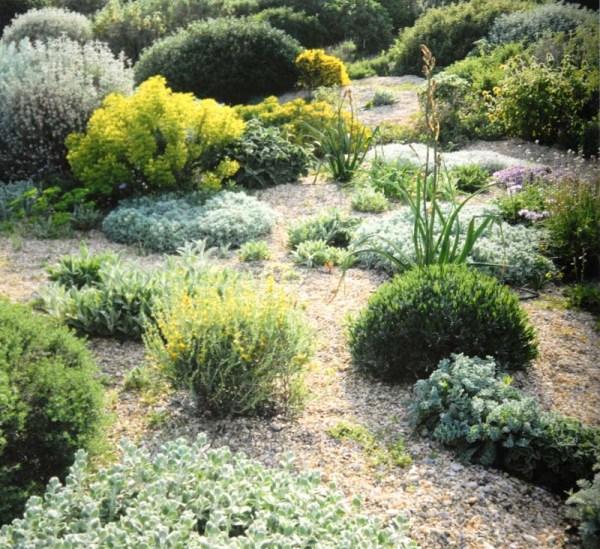 planting design dry gardens