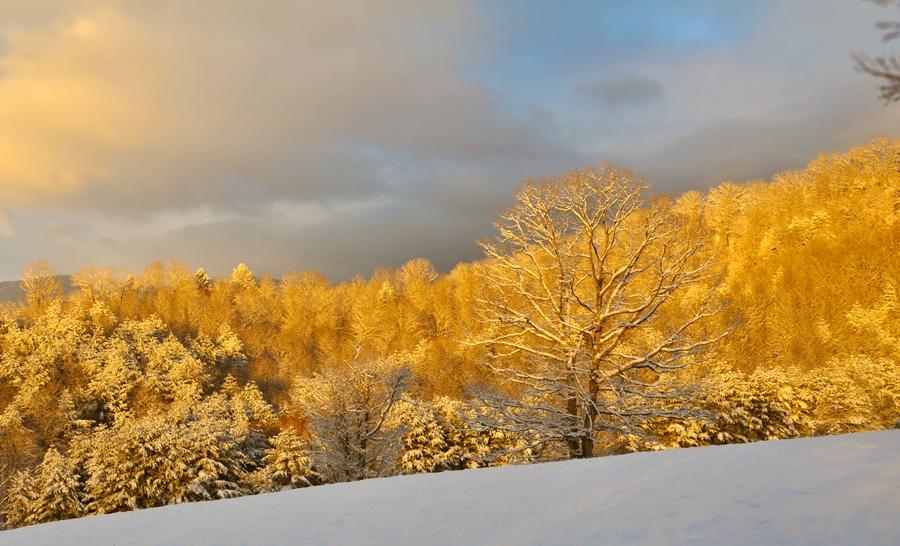 PHOTOGRAPHY: Asheville Snow