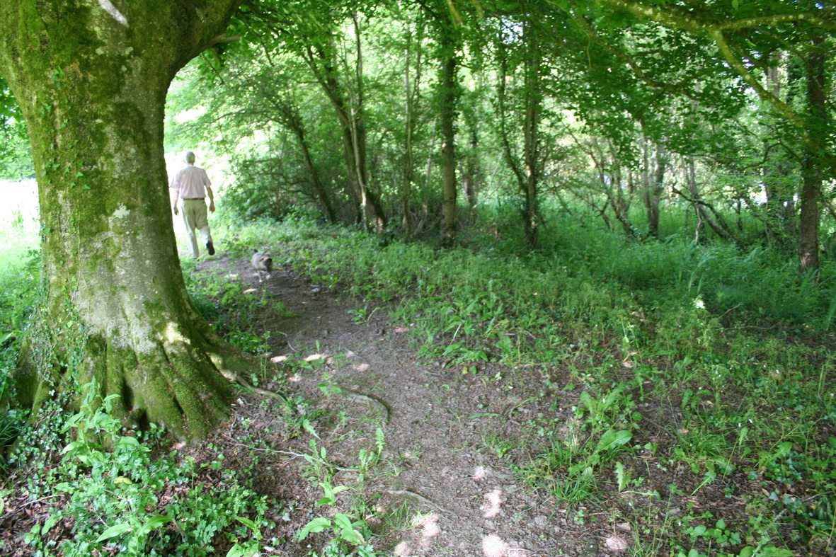 The path towards the mill