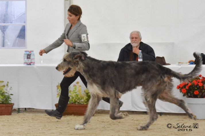 Araberara Pighes on move at Lipica dog show