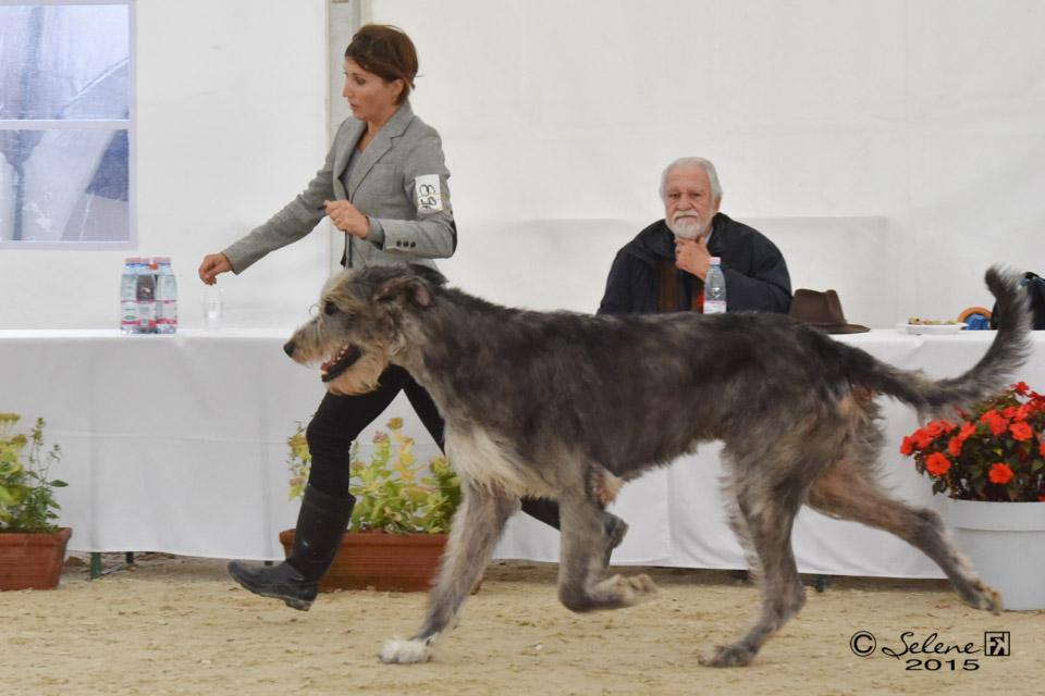 Araberara Pighes on move at Lipica dog show