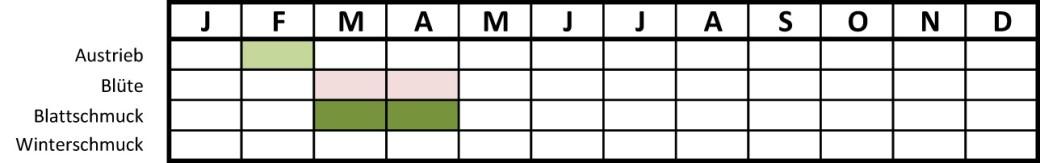 Anemonenemorosatabelle