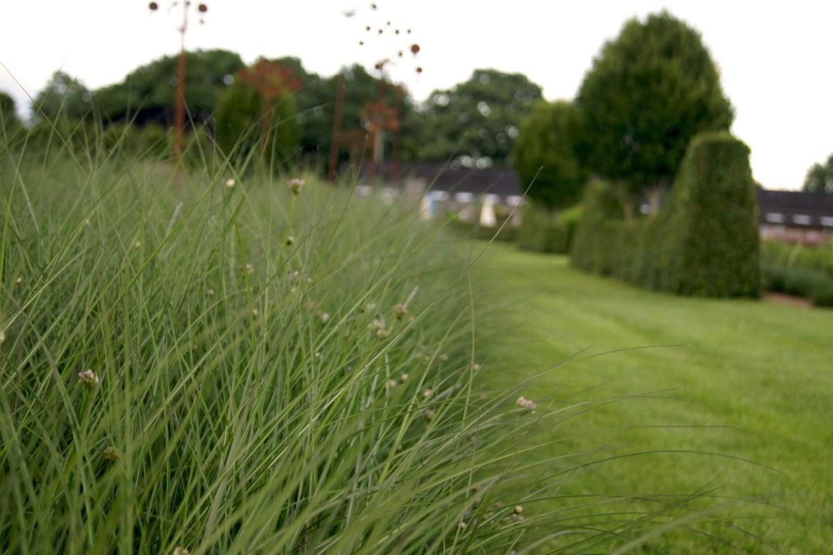 Allium 'Summer Beauty' und Miscanthus sinensis 'Kleine Silberspinne'