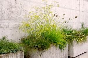 Bepflanzung von Christine Odermatt