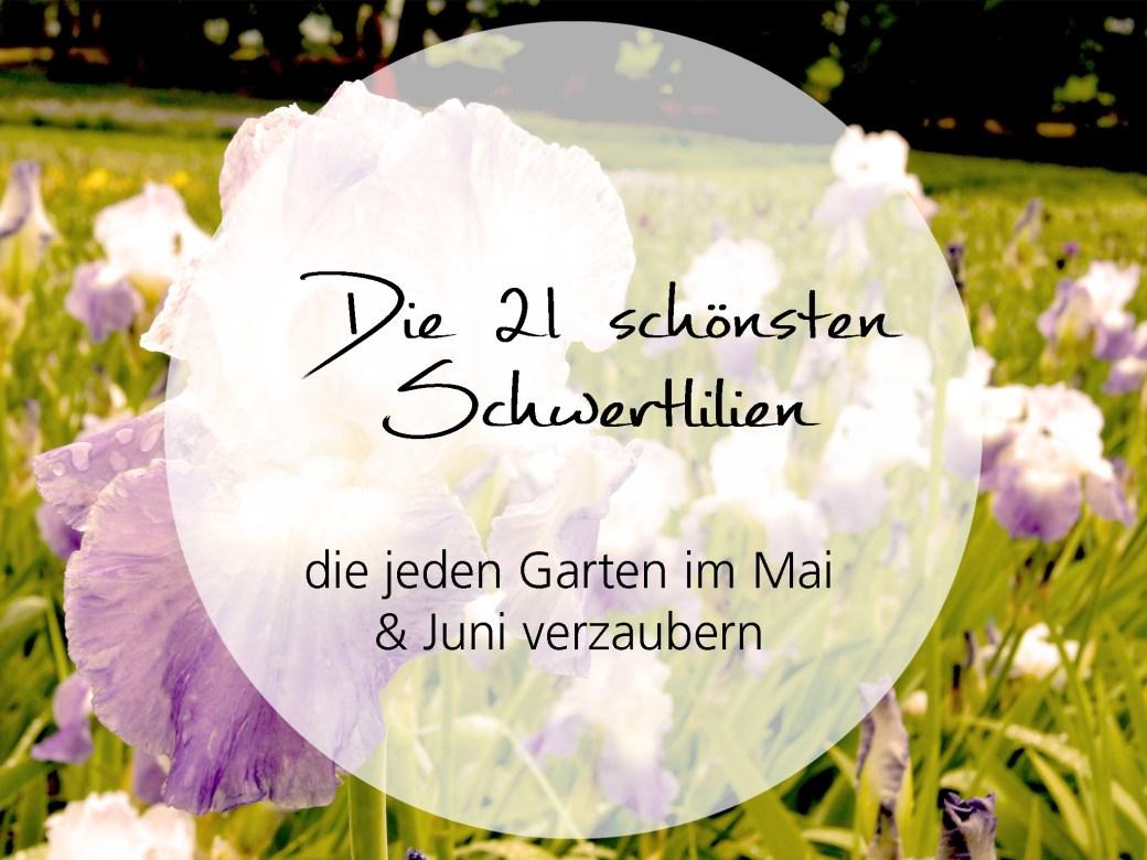 Die 21 schönsten Schwertlilien die jeden Garten im Mai und Juni verzaubern