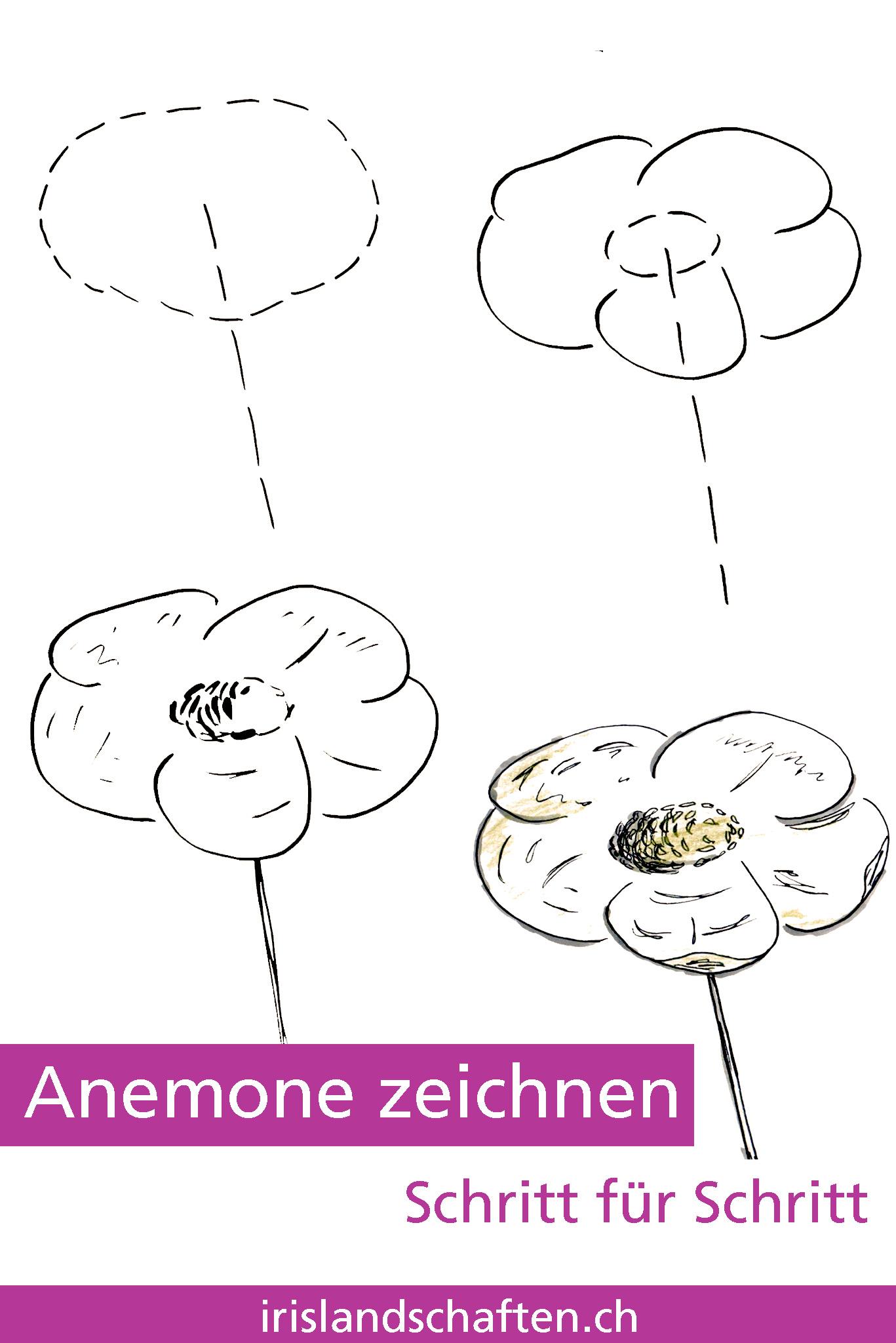 Blumen Zeichnen Blume Zeichnen Mit Martina Wald Seite 29