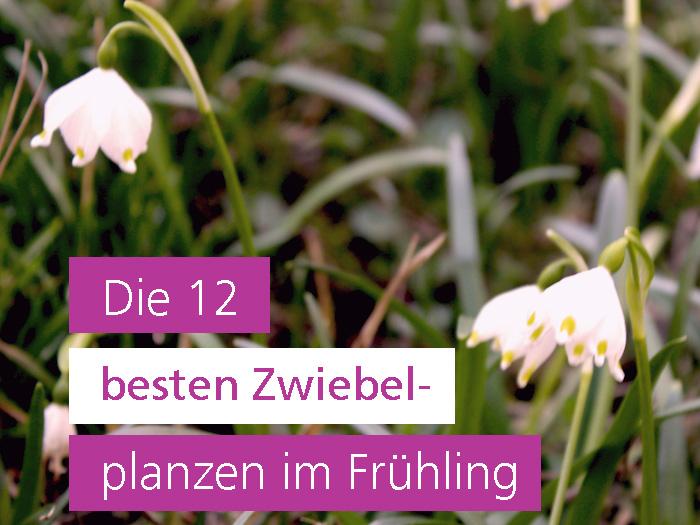Blumenzwiebeln im Frühling Gartengestaltung