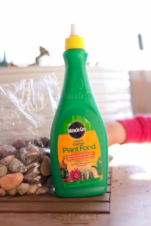 Succulent Garden-The Perfect Family Project!-Miracle Grow Plant Food-IrisNacole.com