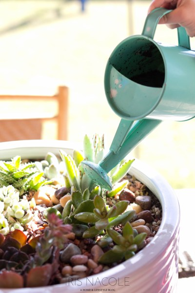 Succulent Garden-The Perfect Family Project!