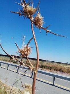 ברקן- הפצת זרעים