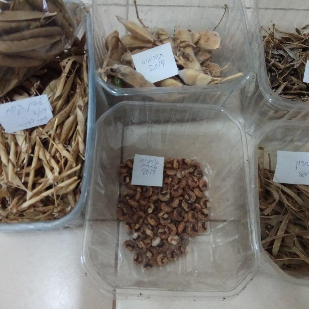 זרעי קטניות שונים