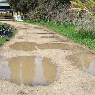 שלוליות בדרך הכניסה לחצרPuddlesPuddles
