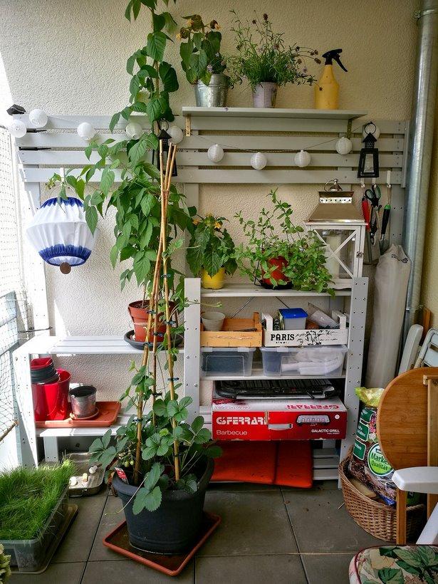 Regal pflanzen balkon
