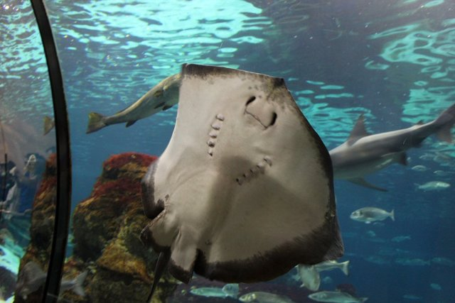 First Timer's Guide: 12 places to see in Barcelona | Aquarium of Barcelona