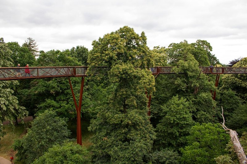 Cool things to do in London | Treetop walk in Kew Gardens