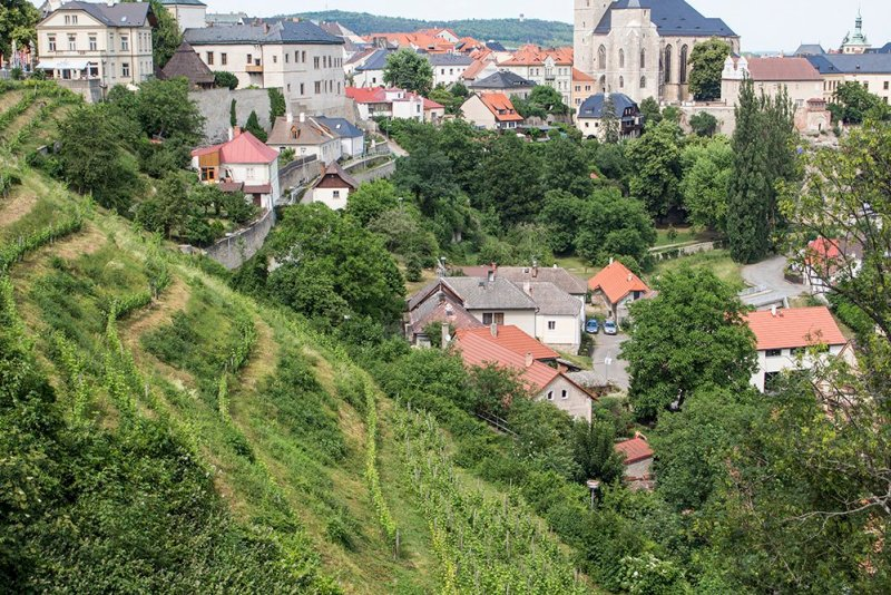 Kutna Hora on a day trip from Prague: things to do | The vineyards of Kutna Hora