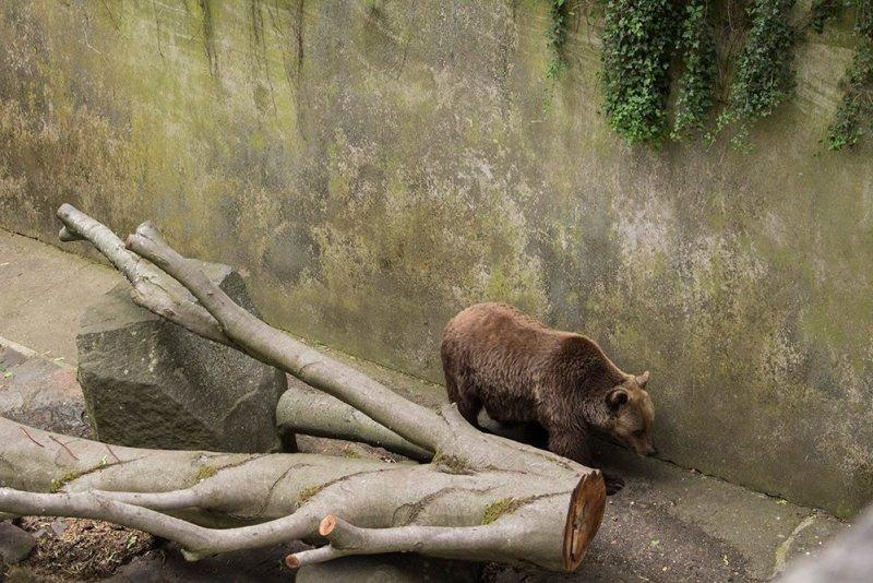A day trip from Prague to Cesky Krumlov Castle   Bear in the moat of Cesky Krumlov Castle