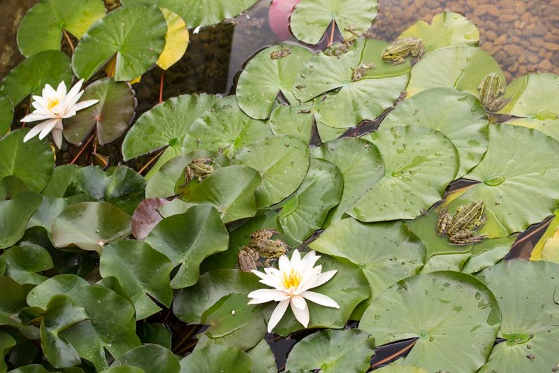 Czech Republic: Visiting Kromeriz Castle and Gardens from Brno   Lilies and frogs in the Flower Garden