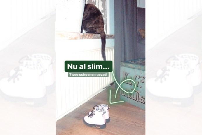 Schoen zetten