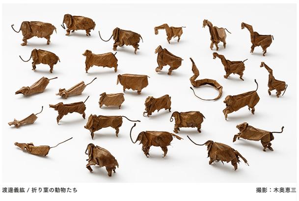 渡邊義紘 / 折り葉の動物たち
