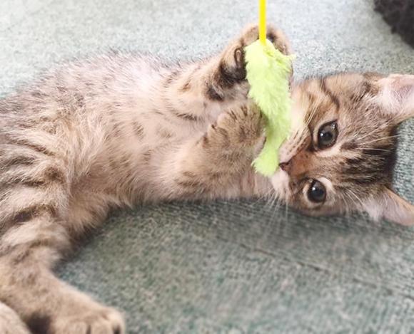 猫カフェ 秋田