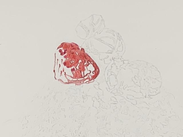 色鉛筆 かき氷 ガラス メイキング